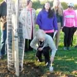 Brian's tree 2-11-12 (12)