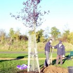 Brian's tree 2-11-12 (2)
