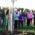 Brian's tree 2-11-12 (6)